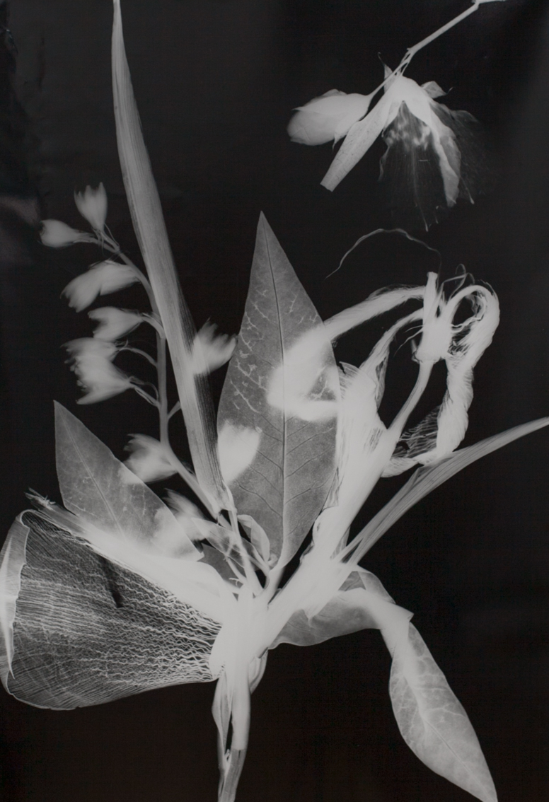 Blütenfotogramm